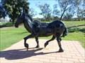 Image for Horse - Northam, Western Australia