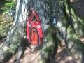 Image for Dunskey woodland garden - Dunskey Estate, Southern Scotland