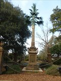 Image for Palmetto Tree - Columbia, SC