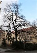 Image for Körner-Linde - Wien, Austria