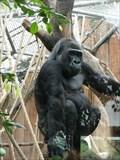 Image for Kölner Zoo - Köln - NRW - Germany