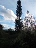 Image for Pine Tree Mast, Borstal, Kent UK