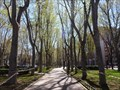 Image for Paseo del Prado - Madrid, Spain