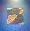 Image for Mosaics @ the Rotunda - Adventure Aquarium - Camden, NJ