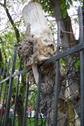 Image for Fence eating tree - Toronto, ON