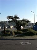 Image for Installing a macrobonsai in the roundabout of Marcelo Macías cost the Council 12,000 euros - Ourense, Galicia, España