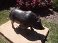 Image for University of Arkansas Razorbacks Pig - Fayetteville AR