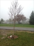 Image for Andy (Dziadzia) Lonski Tree- Toronto, ON