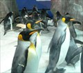 Image for Antarctic Ice Adventure and Scott Base, Kelly Tarlton's Sea Life Aquarium - Auckland, New Zealand