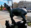 Image for Bear acrobatics on Columbia Avenue
