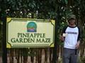 Image for Pineapple Garden Maze O'ahu