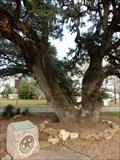 Image for Columbus Hanging Tree - Columbus, TX