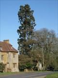 Image for Sequoiadendron giganteum - Adstone House, Northamptonshire, UK