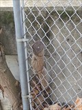 Image for Fence eating tree - Cupertino, CA