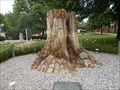 Image for Callixylon Whiteanum Stump - Ada, OK