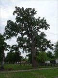 Image for Page's Tree - Clarksville Cemetery - Clarksville, TX