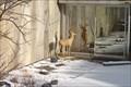 Image for Westside Lucky 7 - Binghamton, NY