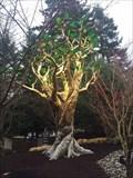 "Image for ""Golden Tree"" Memorial."