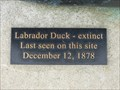 Image for LAST - Sighting of the Labrador Duck - Elmira, NY