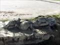 Image for Turtles - Salado, TX