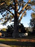 Image for Wardholme Torrey Pine, Carpinteria, CA