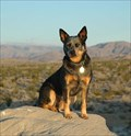 Image for Escondido, CA: The Mayflower Dog Park