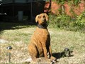 Image for Yellow Lab - Galveston, TX