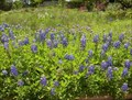 Image for wildflower center, austin TX