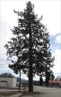 Image for Living Christmas Tree - Troy, Montana