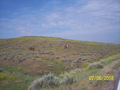 These are some of the horses that roam the hillsides along the road that heads over toward where Reno and Benteen were located, wondering what was happening with Custer, by MountainWoods