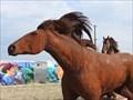 Image for Horses in Motion - Denver, CO, USA
