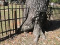 Image for Fence Eating Tree - Thomasville, Georgia