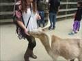 Image for Feed the Goats - Family Farm - San Francisco, CA