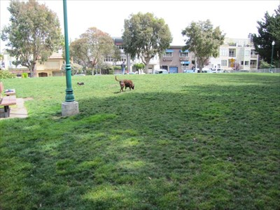Open Meadow, Used by Dog Owners, San Francisco, CA