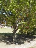 Image for Thomas E. Mosley -  Floral Haven Memorial Gardens - Broken Arrow, OK