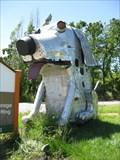 Image for Demented But Lovable Dog - Sebastopol, CA