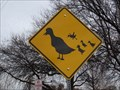 Image for Duck Crossing - City Lake Park - Mesquite, TX