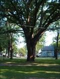 Image for Clinton Park Tree - Tonawanda, NY