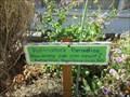 Image for Pollinators Paradise - Santa Cruz, CA