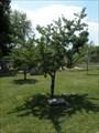 Image for Cherry Tree - Rapid City, South Dakota