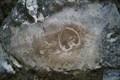 Image for Megalodon fossils, Koppenbrüllerhöhle, Obertraun, AT