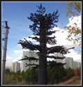 Image for Pine Tree Cell Tower - Ankara, Turkey