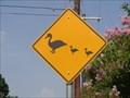 Image for Duck Crossing - Boerne River Road Park - Boerne, TX