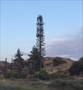 Image for Pine Tree - Beaumont, CA