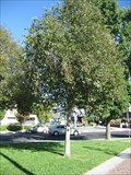 Image for Fred Hsieh - Monterey Park, CA
