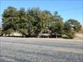 Image for Half-Way Oak - Stephens County, TX
