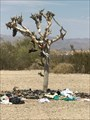 Image for Slab City Shoe Tree - Niland, CA