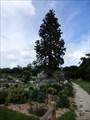 Image for Jardin Botanique Universitaire Poitiers,France
