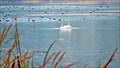 Image for Vaseux Lake Migratory Bird Sanctuary - Okanagan Falls, BC