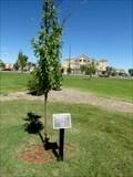 Image for Lethbridge Twinning Society Tree - Lethbridge, Alberta
